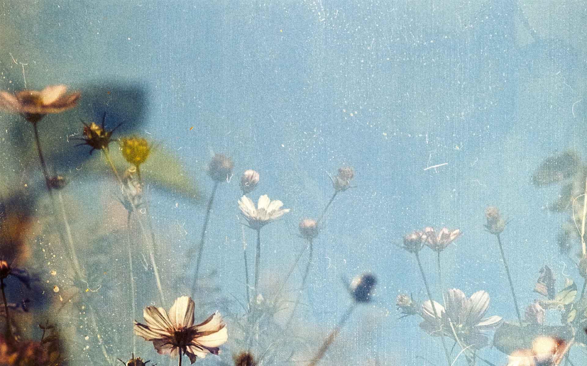 flowery dreams - Duplicate